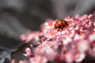 ladybird - image by Deb Fletcher